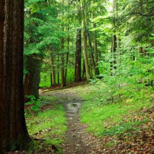 court inn eco path